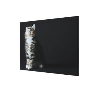 Toile Chat tigré grand