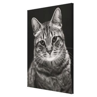 Toile Chaton tigré noir