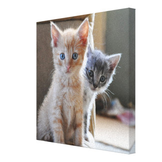Toile Chatons curieux