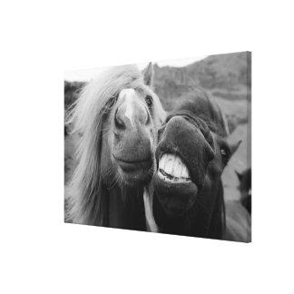 Toile Chevaux de sourire des images   de Getty