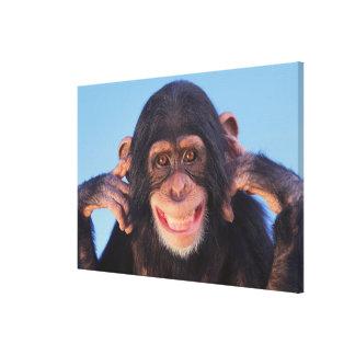 Toile Chimpanzé de sourire des images | de Getty