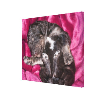 Toile Chiot adorable de caniche de sommeil