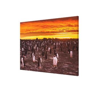 Toile Colonie de pingouin au coucher du soleil, les