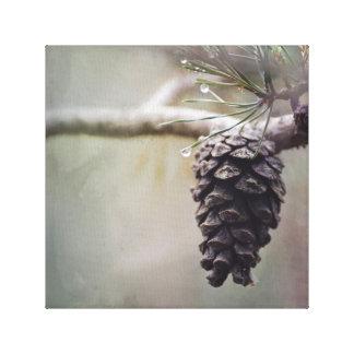 Toile Cône humide de pin sur de pin de branche le vert
