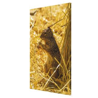 Toile Consommation d'écureuil de roche