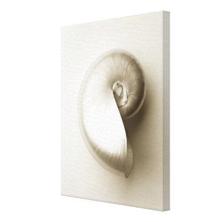 Toile Coquillage de Nautilus de perle