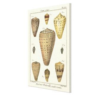 Toile Coquilles vintages de cône