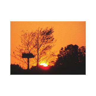Toile Coucher du soleil de balbuzard