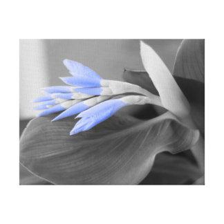 Toile Couleur sélective de bourgeons bleu-clair