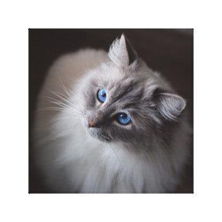 Toile de chat de Ragdoll - les yeux bleus de Toiles