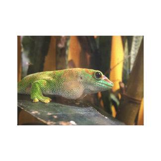 toile de gecko