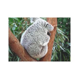 Toile de koala