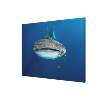 Toile De la vue d'un requin de baleine