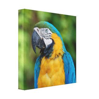 Toile de perroquet