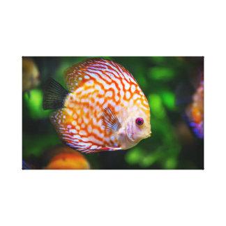 Toile de poissons de disque