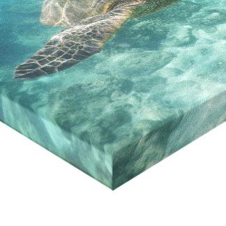 Toile de tortue de mer verte