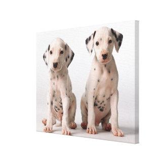 Toile Deux petits chiots dalmatiens noirs et blancs