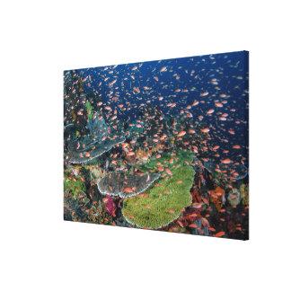 Toile Écoles de récif coralien et de poissons