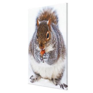 Toile Écureuil mignon mangeant un écrou dans la neige