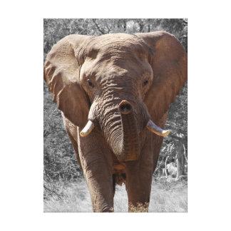 Toile Éléphant africain de buisson
