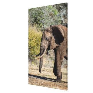 Toile Éléphant avec de longues défenses