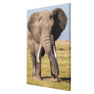 Toile Éléphant dans une pose agressive