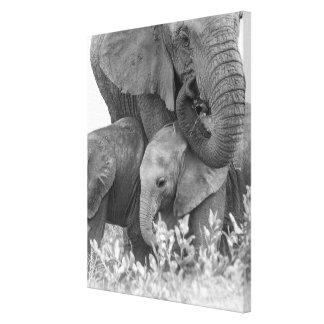 Toile Éléphant et deux veaux | Samburu