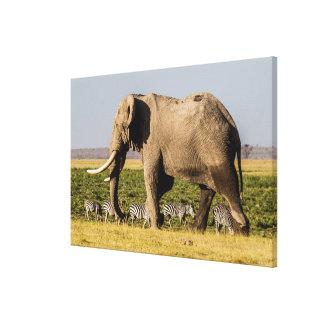 Toile Éléphant et zèbres au point d'eau