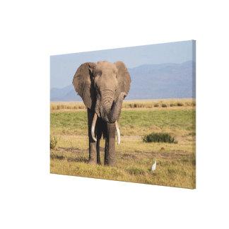 Toile Éléphant ondulant son tronc
