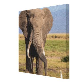 Toile Éléphant recherchant le Groung