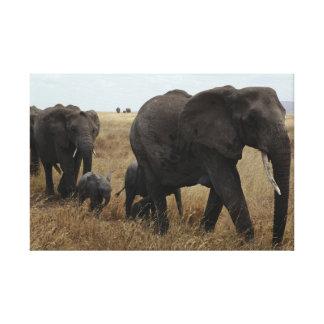 Toile Éléphants