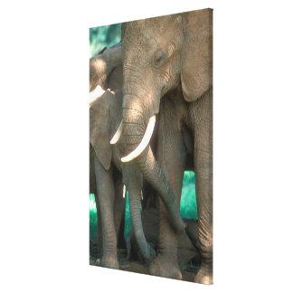 Toile Éléphants protégeant des jeunes