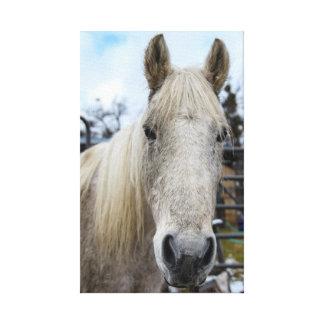 Toile enveloppée de cheval blanc