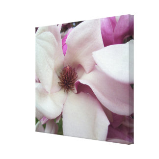 Toile - enveloppée - fleur de magnolia de soucoupe