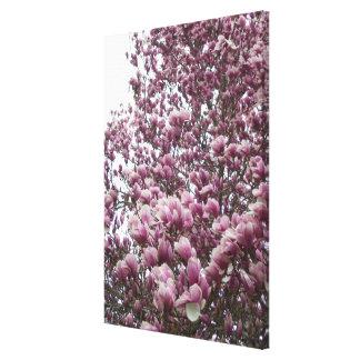 Toile - enveloppée - ll de magnolia de soucoupe