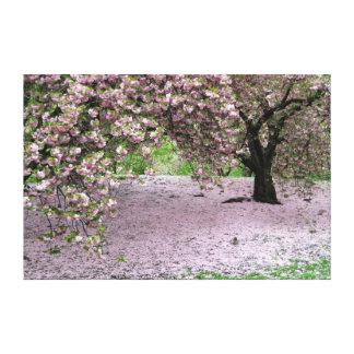 toile enveloppée par arbre de fleurs de cerisier