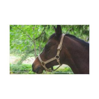 Toile enveloppée par cheval de Brown