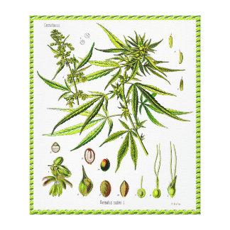 Toile enveloppée par dessin vintage de botanique d toiles