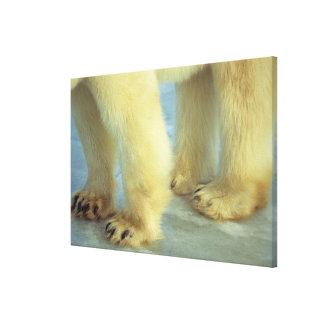 Toile Fermez-vous des pieds d'ours blanc