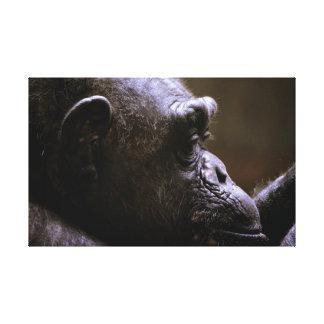 Toile Fin de tête de chimpanzé