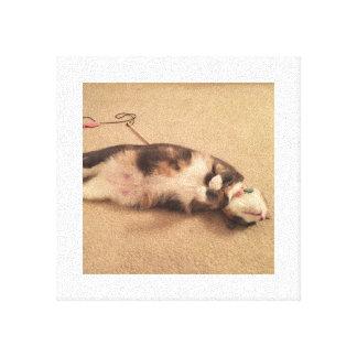 Toile Fixation de chat de Kasie
