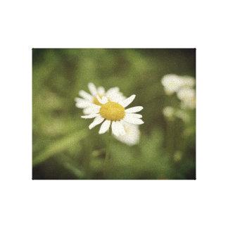 Toile Fleur assez blanche dans un domaine