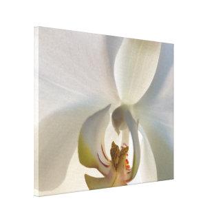 Toile Fleur blanche de fleur d'orchidée