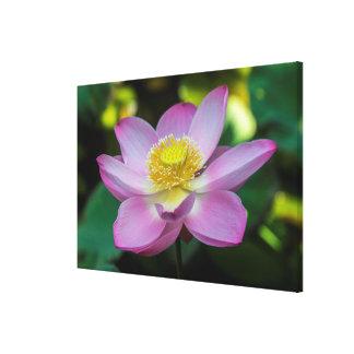 Toile Fleur de lotus de floraison, Indonésie
