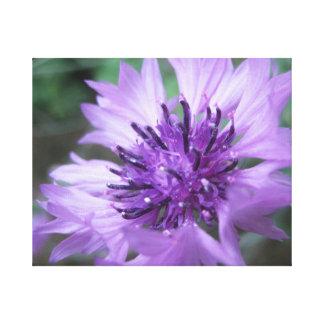 Toile Fleur de mur 6