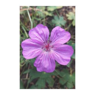 Toile Fleur rose à 8600'