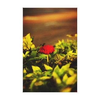 Toile Fleur rouge simple Niles Michigan