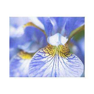 Toile Fleur sibérienne d'iris