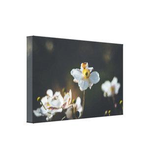 Toile Fleurs blanches d'anémone