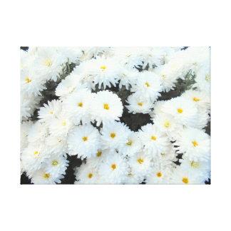 Toile Fleurs blanches de chrysanthème